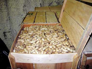 Waldron Farm's Green Peanuts