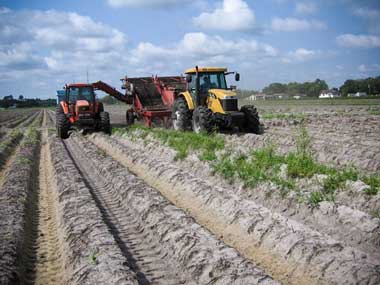 Challenger Tractor Harvesting Potatoes